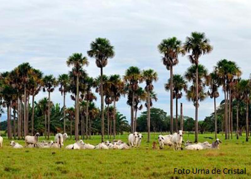 Excursiones Llanos Orientales